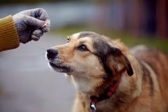Portrait d'un chien non de race de rouge Image libre de droits
