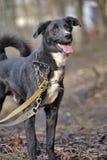 Portrait d'un chien non de race noir et blanc Photo stock