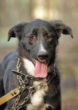 Portrait d'un chien non de race noir et blanc Images libres de droits