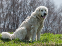 Portrait d'un chien sur le pré Images libres de droits
