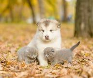 Portrait d'un chiot et des chatons sur des feuilles d'automne Image stock