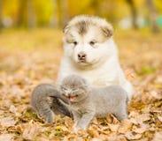 Portrait d'un chiot et des chatons sur des feuilles d'automne Photo libre de droits