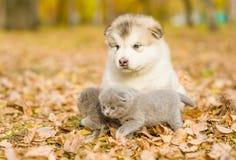 Portrait d'un chiot et des chatons sur des feuilles d'automne Images stock