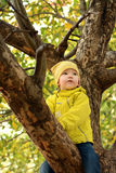 Portrait d'un enfant sur l'arbre Photo stock