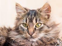Portrait d'un jeune close-up_ rayé de chat photos libres de droits