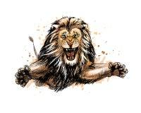 Portrait d'un lion sautant d'une éclaboussure d'aquarelle illustration libre de droits