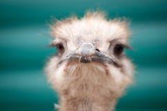 Portrait d'un oiseau Photos stock