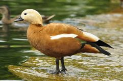 Portrait d'un oiseau Photos libres de droits
