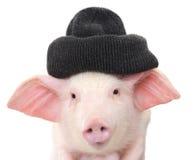 Portrait d'un porc images stock