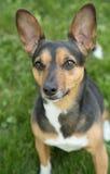 Portrait d'un terrier photos libres de droits