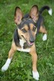Portrait d'un terrier photos stock