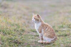 Portrait d'une équitation de chat sur un fond d'herbe verte image stock