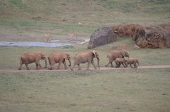 Portrait d'une famille des éléphants en parc naturel du vieux mien de Cabarceno de l'extraction de fer Le 25 ao?t 2013 Cabarceno, images libres de droits