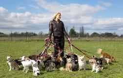 Séance de chien Photos stock