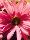 Portrait d'une fleur Images stock