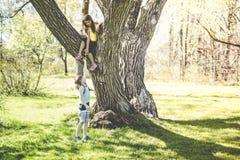 Portrait d'une petite fille sur un arbre avec son ami donnant une fleur Photo libre de droits