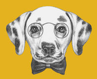 Portrait of Dalmatian Dog with glasses and bow tie. Royalty Free Stock Photo
