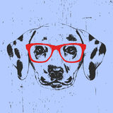 Portrait of Dalmatian Dog with glasses. stock illustration