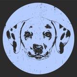 Portrait of Dalmatian Dog. Royalty Free Stock Photos