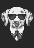 Portrait of Dalmatian in suit. Hand drawn illustration Stock Photography