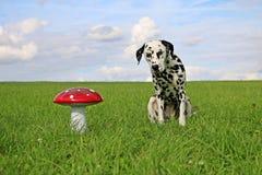 Portrait dalmatien de chien dans le jardin Photographie stock