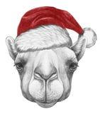 Portrait de chameau avec Santa Hat Images stock