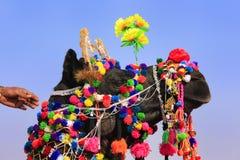 Portrait de chameau décoré au festival de désert, Jaisalmer, Inde Photos stock