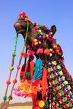 Portrait de chameau décoré au festival de désert, Jaisalmer, Inde image stock
