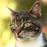 Portrait de chat Image libre de droits