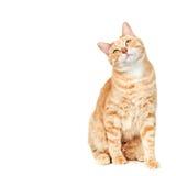 Portrait de chat. Photo stock