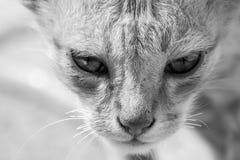 Portrait de chat images stock