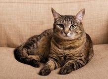 Portrait de chat aux yeux verts photographie stock libre de droits
