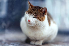Portrait de chat drôle Photos stock