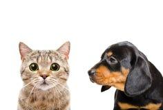Portrait de chat et de chiot curieux Photo stock