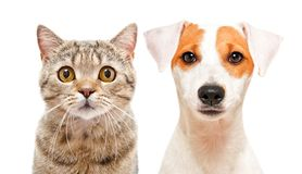Portrait de chat mignon et de jeune chien images stock