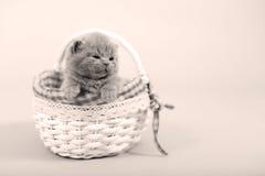 Portrait de chaton dans un panier Photo stock