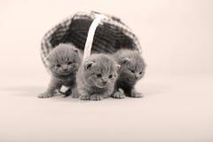 Portrait de chaton près d'un panier Photos libres de droits