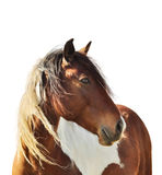 Portrait de cheval Photo stock