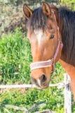 Portrait de cheval Photos libres de droits