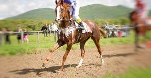 Portrait de cheval d'emballage dans l'action Images libres de droits