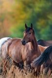 Portrait de cheval dans le troupeau photo libre de droits