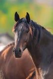 Portrait de cheval dans le troupeau photographie stock libre de droits