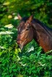 Portrait de cheval extérieur photos stock