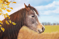 Portrait de cheval sur le fond du pâturage et des branches d'automne Photographie stock