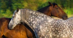 Portrait de chevaux extérieur Photographie stock