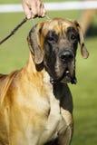 Portrait de chien Images stock