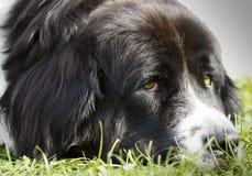 Portrait de chien Image libre de droits