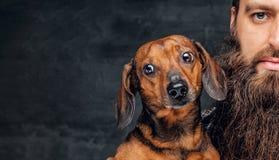 Portrait de chien de blaireau brun et de son ami barbu d'homme Images stock