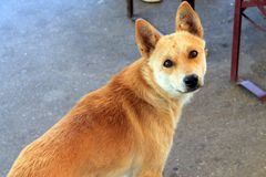 Portrait de chien sans abri Images libres de droits