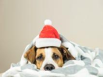 Portrait de chiot de terrier du Staffordshire dans le chapeau de Noël du père noël de couverture de jet se situant dans le lit Image stock